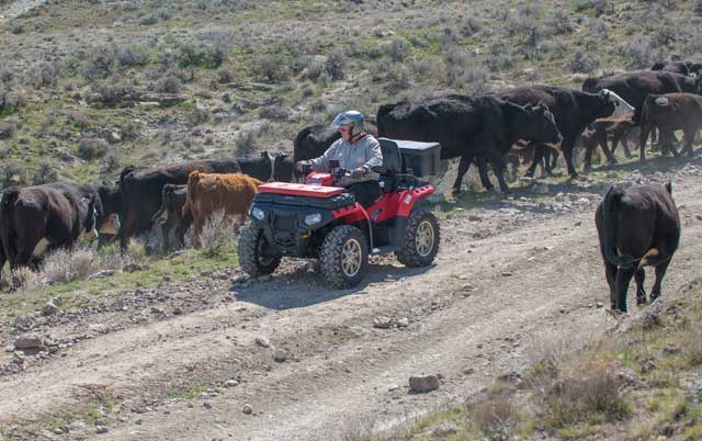 ATV riders go slow on the trail, allowing the livestock to move off of it. Public lands in the Owyhees are managed for multiple uses. If everyone can show respect for other uses, we can share the lands for many generations to come.