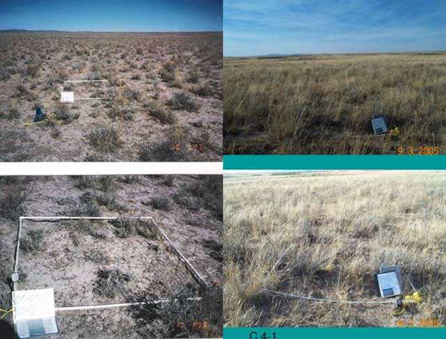 BLM officials encourage ranchers to do their own monitoring to help document rangeland condition and health.