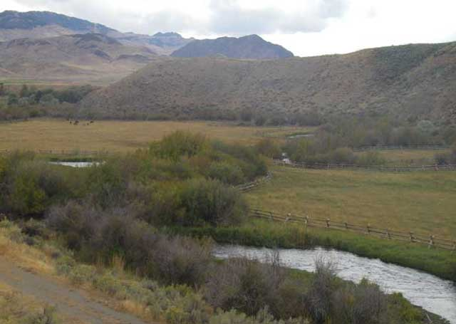 Buck fence along the Pahsimeroi River protects spawning habitat, stream banks and riparian areas.