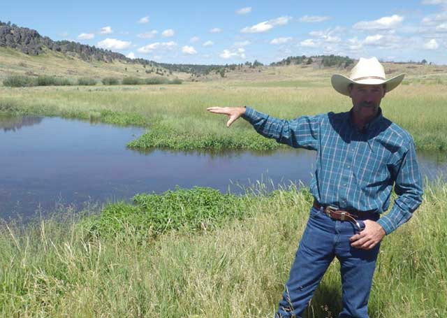 Chris Black has built a series of ponds in the Toy Meadows area for wildlife, cattle and water storage. The ponds help sub-irrigate the meadow, growing tall grass for cattle, while also providing habitat for frogs and other wildlife.