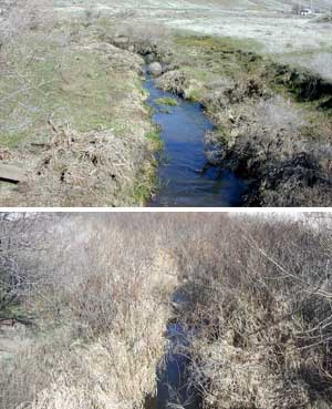 Deadman Creek before (top) and after pics show a rebound in the riparian vegetation after fencing was installed. Washington DOE guidelines allow Klaveano to graze the riparian area several times a year if he chooses to do so