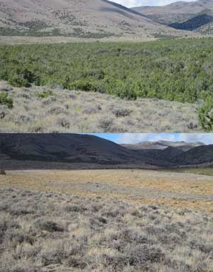 Jim Sage Mountain pre-treatment (top) and post-treatment (above) in 2013. A masticator and chainsaw work were used to eliminate the juniper trees. Photos courtesy BLM.