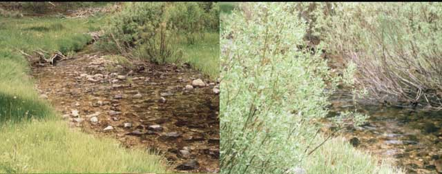 Monitoring on riparian areas can include before and after photos to show the regrowth of woody vegetation such as willows and other riparian plants over time.