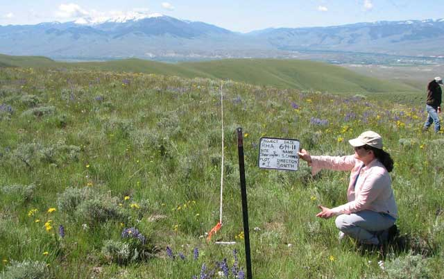 Range monitoring helps document rangeland ecological conditions over time on federal grazing allotments and on private ranchlands.