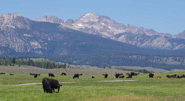 The Henslee family has pastured their cattle in the Sawtooth Valley since the 1930s