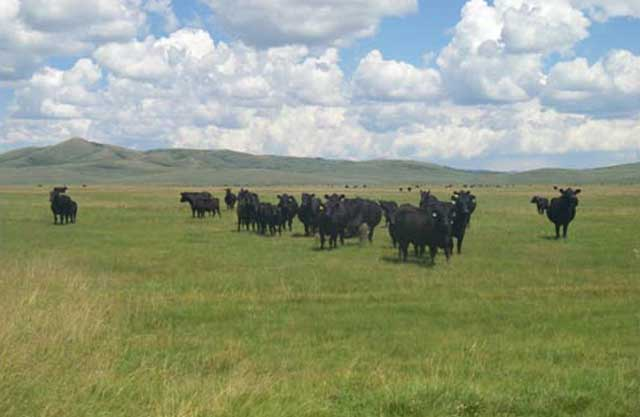 The Eastern Idaho Grazing Association grazes cattle and sheep on 90,000 acres in the Blackfoot Mountains of Eastern Idaho.