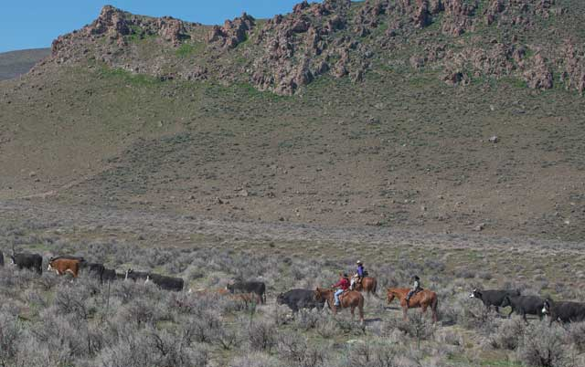 The Jaca Family drives their cattle into the Owyhee Mountains near Hemingway Butte on a sunny spring day.