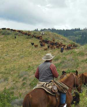 The Minks drive their cattle into spring range on Council Mountain near Council.