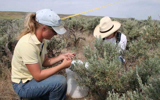 The first step in renewing a BLM grazing permit is for the agency to conduct a rangeland health assessment, checking on the health of plants, wildlife, water quality and other resources in a grazing allotment.