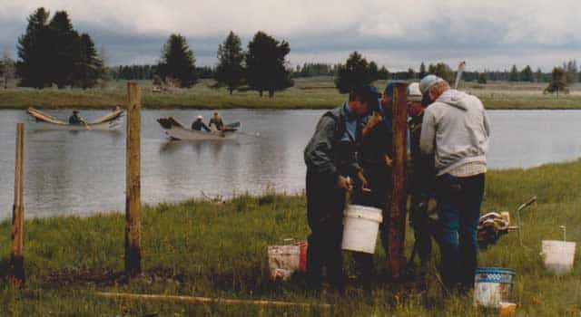 Volunteers with the Henrys Fork Foundation install fence posts for the first riparian fence along seven miles of the Henrys Fork, a blue-ribbon trout stream, to keep cattle out of the river and prevent damage to the streambank. This project occurred in 1986. Fencing helps keep the peace between anglers and ranchers. (Henrys Fork Foundation photo)