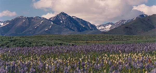 Wildflowers bloom on the spring range under the shadow of the Pioneer Mountains. Left, John and Diane at the ranch.