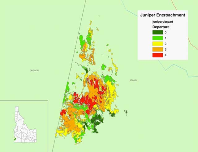 Graphic shows the extent of the juniper invasion issue in the Owyhees. The trees normally grew in the rocks surrounding meadows, and over time, the trees have encroached into habitats where they never grew before. The reason for the spread is the absence of fire