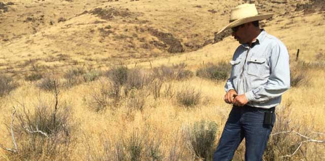 Rancher Charlie Lyons checks out some bitterbrush plants that were resprouting in the summer of 2014.