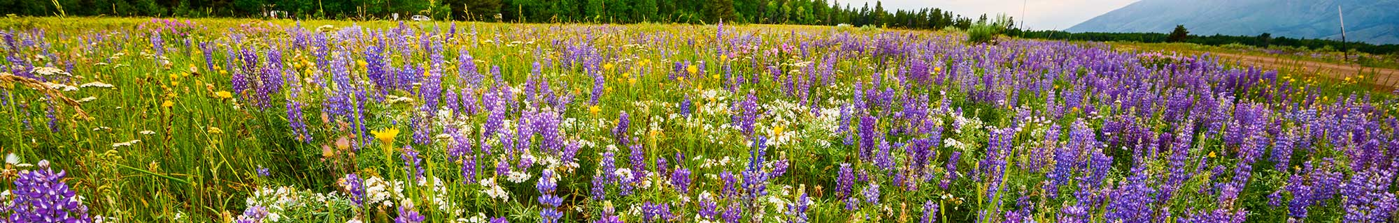 wild flowers in a field