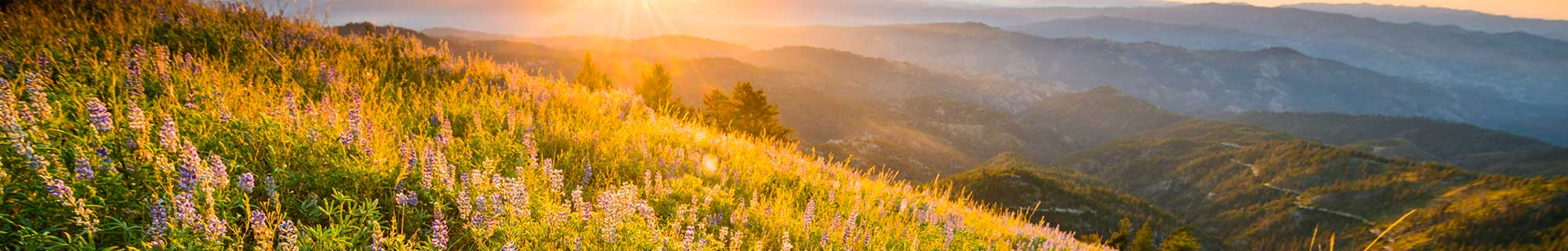 wildflowers at sun rise